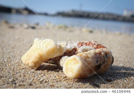 珊瑚 46106946