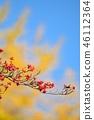 山茱萸 盛开的山茱萸 水果 46112364