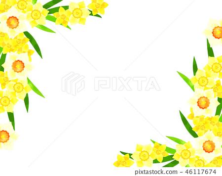 水仙花框架 46117674