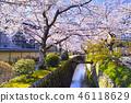 京都 哲學之道 春天 46118629