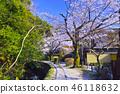 京都 哲學之道 春天 46118632