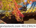 Nara Park (November Autumn leaves Autumn deer) 46129024