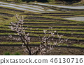 Rice terrace 46130716