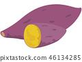 vector, vectors, sweet potato 46134285