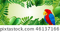 bird parrot jungle 46137166