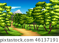 green, nature, forest 46137191