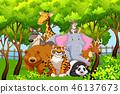 nature wood wild 46137673