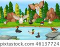 birds lake scene 46137724