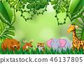 elephant, jungle, wild 46137805