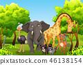 WIld animal in nature 46138154