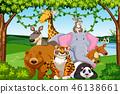 forest, animal, wildlife 46138661
