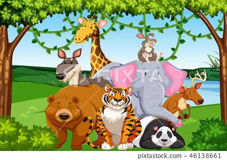 Wild animals in the forest 46138661