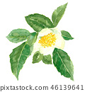 흰 꽃, 하얀 꽃, 수채화 물감 46139641