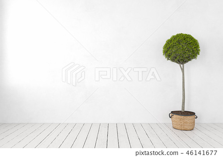 Blank white wall with plant, tree, wooden white floor. 46141677