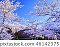 京都 祇園 祇園白川 46142375