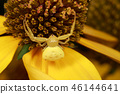Yellow Spider on the flower 46144641