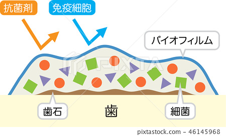 tooth, cross-section diagram, white background 46145968