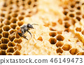 Working bee in a honeycomb. 46149473