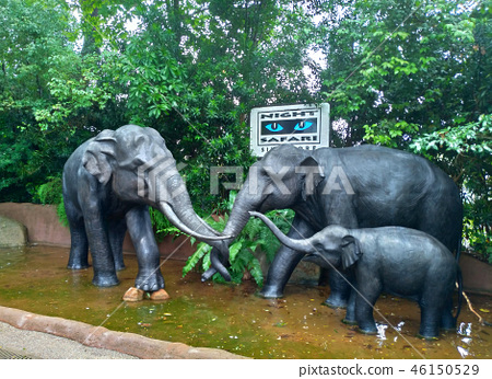 Singapore Night Safari Elephant Statue Singapore Night Safari Elephant 46150529