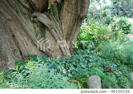 綠色世界樹幹植物樹綠色從事園藝 46150539