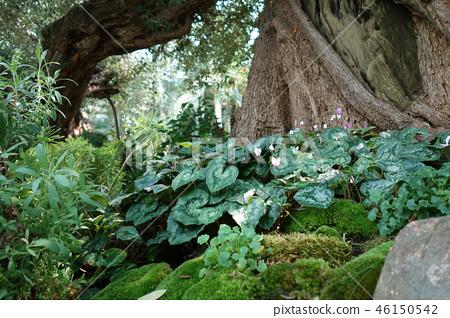 Green world tree trunk plant Tree Green Gardening 46150542
