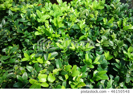 Gardening plants Green Green Leaf Gardening 46150548