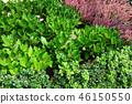 식물 녹색 분홍색 꽃 Green leaf and Pink Flower 46150550