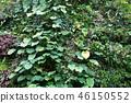 녹색 벽 잎 원예 Green leaf Gardening 46150552