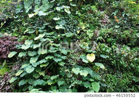 綠色牆壁從事園藝綠色葉子從事園藝 46150552