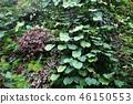 녹색 벽 잎 원예 Green leaf Gardening 46150553