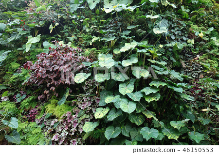 Green wall leaves gardening Green leaf Gardening 46150553