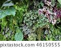 녹색 벽 잎 원예 Green leaf Gardening 46150555