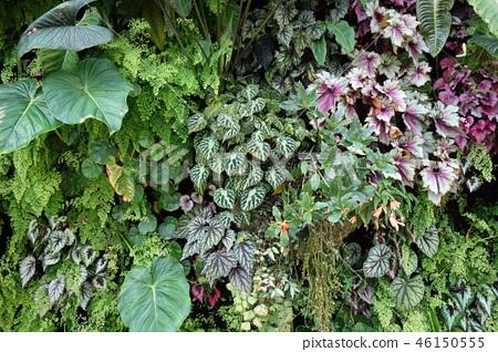 綠色牆壁從事園藝綠色葉子從事園藝 46150555