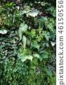 녹색 벽 잎 원예 Green leaf Gardening 46150556