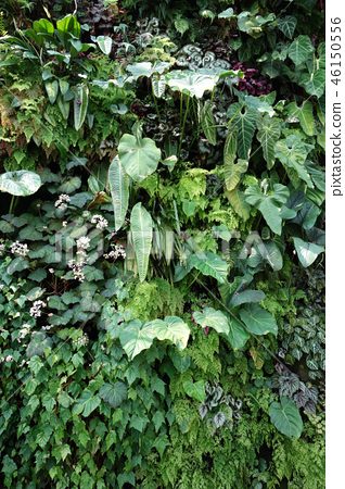 Green wall leaves gardening Green leaf Gardening 46150556