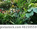 녹색 잎 원예 Green leaf Gardening 46150559