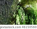 신록 나무 줄기 자연 Green Tree Nature 46150560