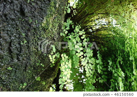 Fresh green tree trunk nature Green Tree Nature 46150560