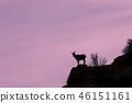 Desert Bighorn Sheep Ewe Silhouetted 46151161