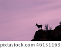 Desert Bighorn Sheep Ewe Silhouetted 46151163