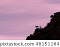 Desert Bighorn Sheep Ewe Silhouetted 46151164