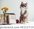 Charming, grey, fluffy kitten and vintage books 46152710