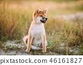 动物 狗 狗狗 46161827