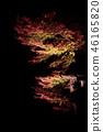 Autumn leaves and stone lanterns 46165820