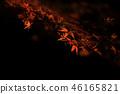 Autumn leaves night 46165821