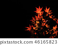 Autumn leaves night 46165823