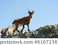 ibex alpine rock 46167236
