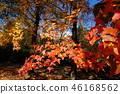 ต้นเมเปิล,สวน,สวนสาธารณะ 46168562