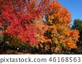 ต้นเมเปิล,สวน,สวนสาธารณะ 46168563