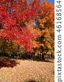 ต้นเมเปิล,สวน,สวนสาธารณะ 46168564